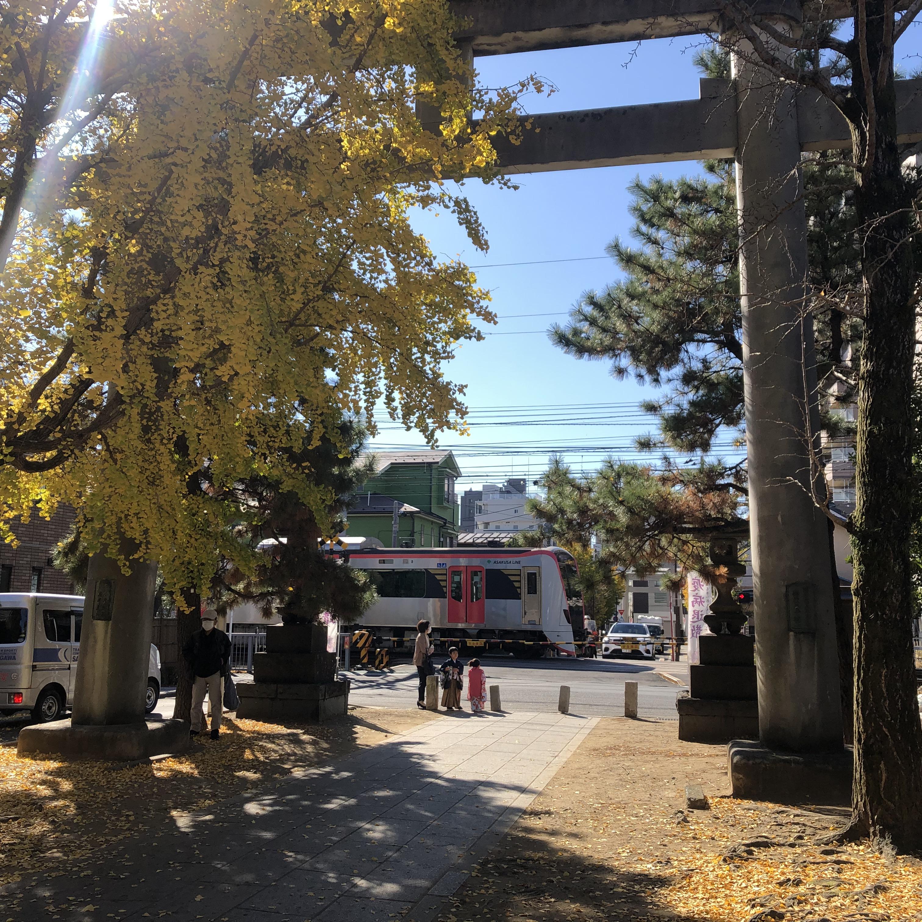 八幡神社 銀杏と電車